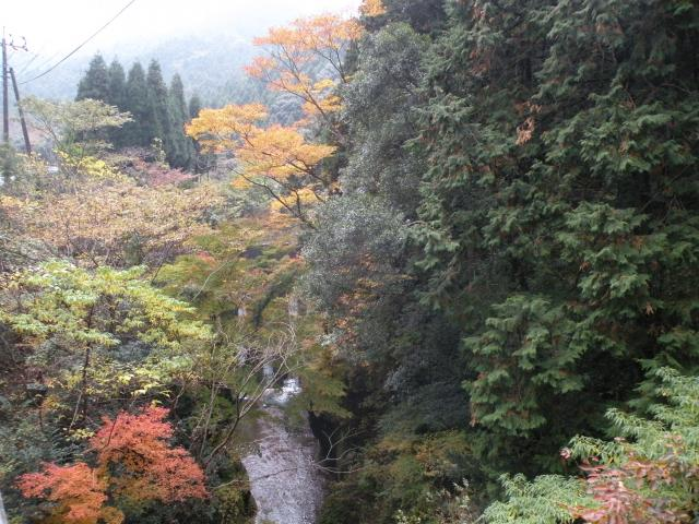 Autumn leaves of Hiratani Gorge