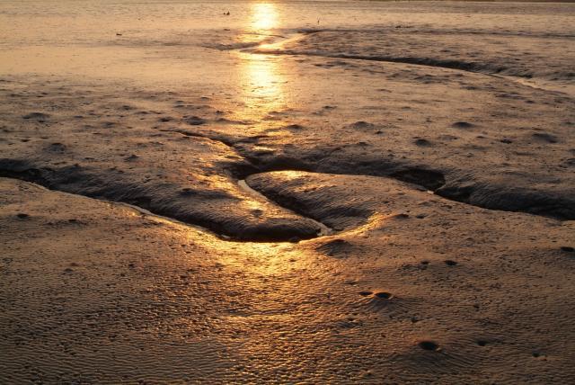 朝日に照らされる干潮時の有明海