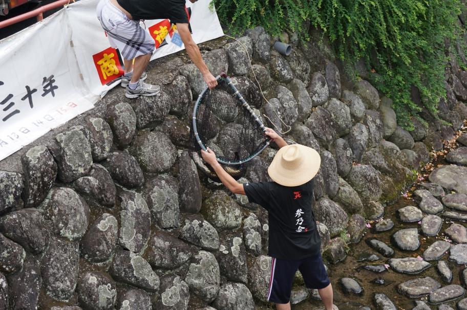 広松養魚場の協力による鯉の放流