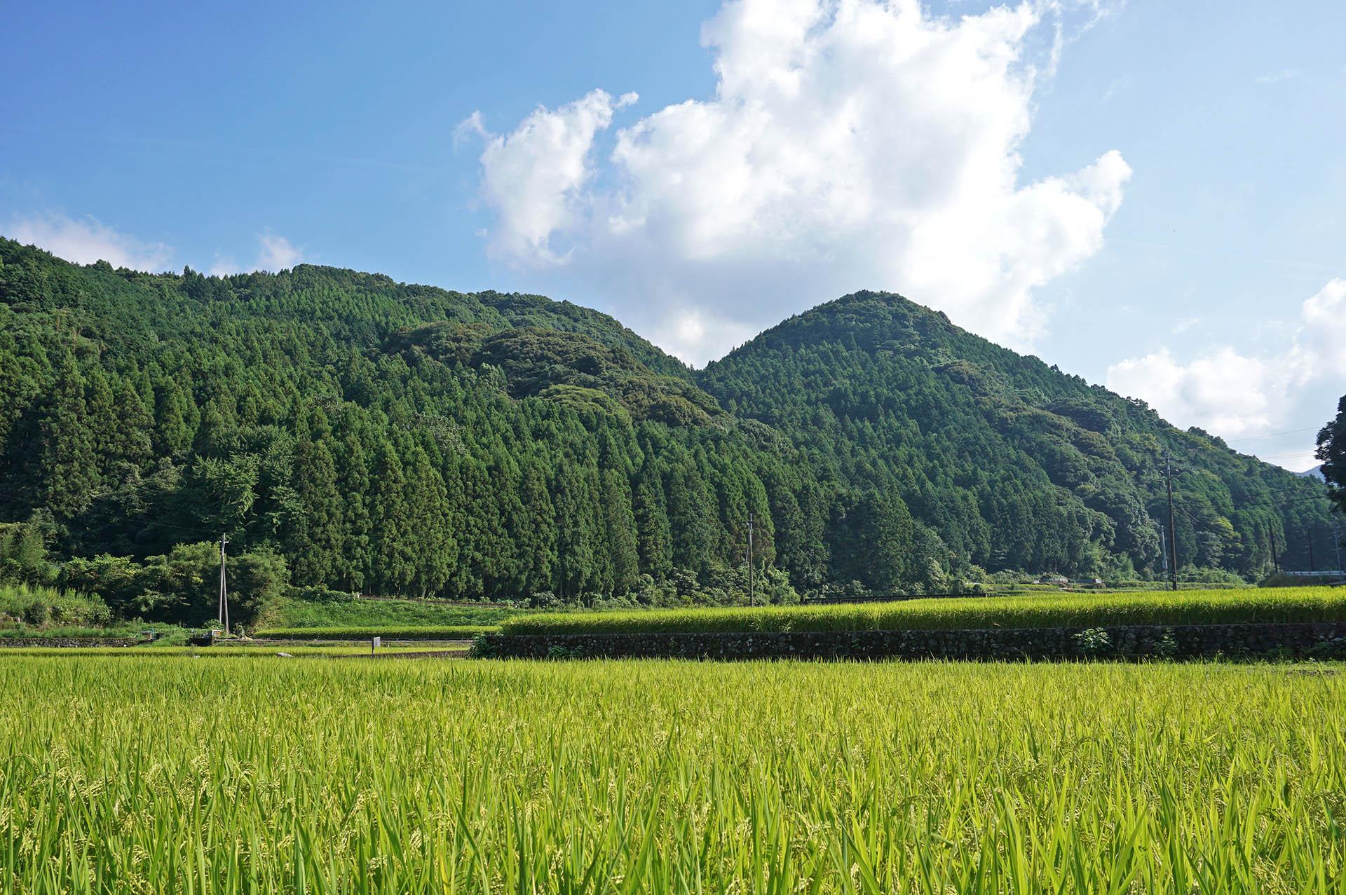 山浦地区の田んぼや山々