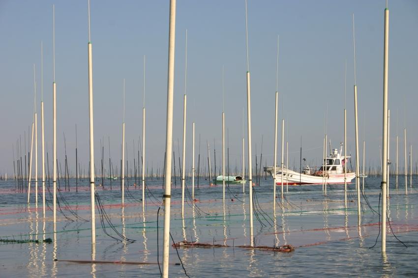 有明海で盛んに行われる海苔の養殖