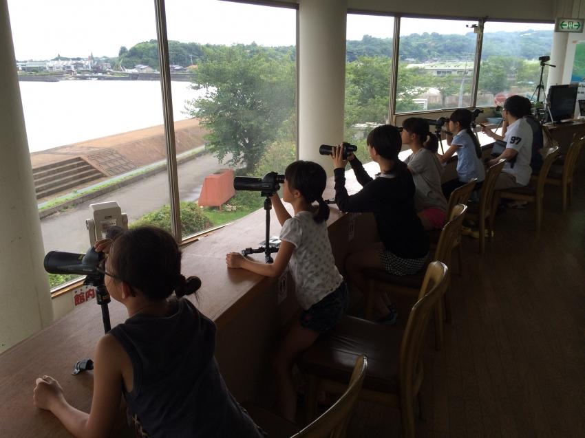 望遠鏡を使って有明海の生物や野鳥を観察できる