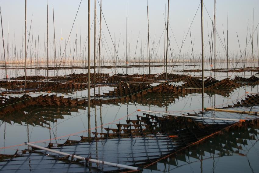 有明海の海苔漁