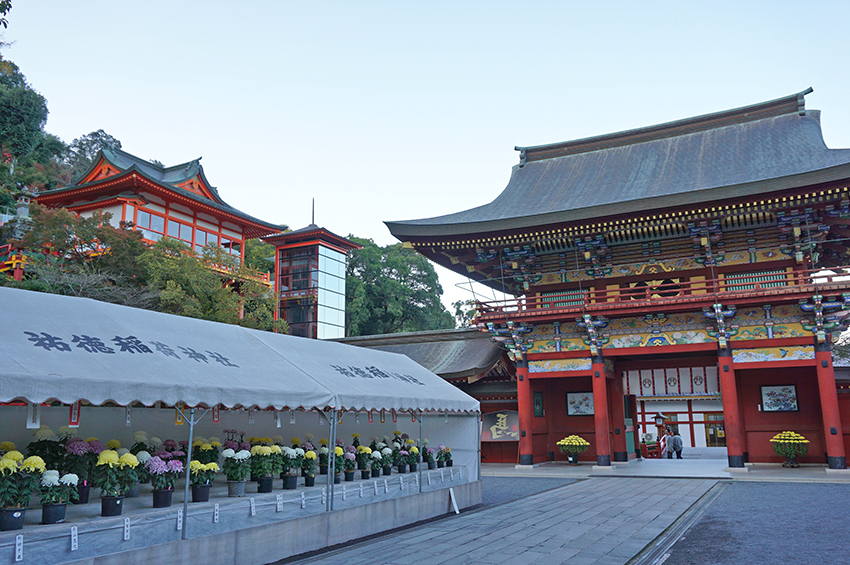 祐徳稲荷神社の楼門と菊の花