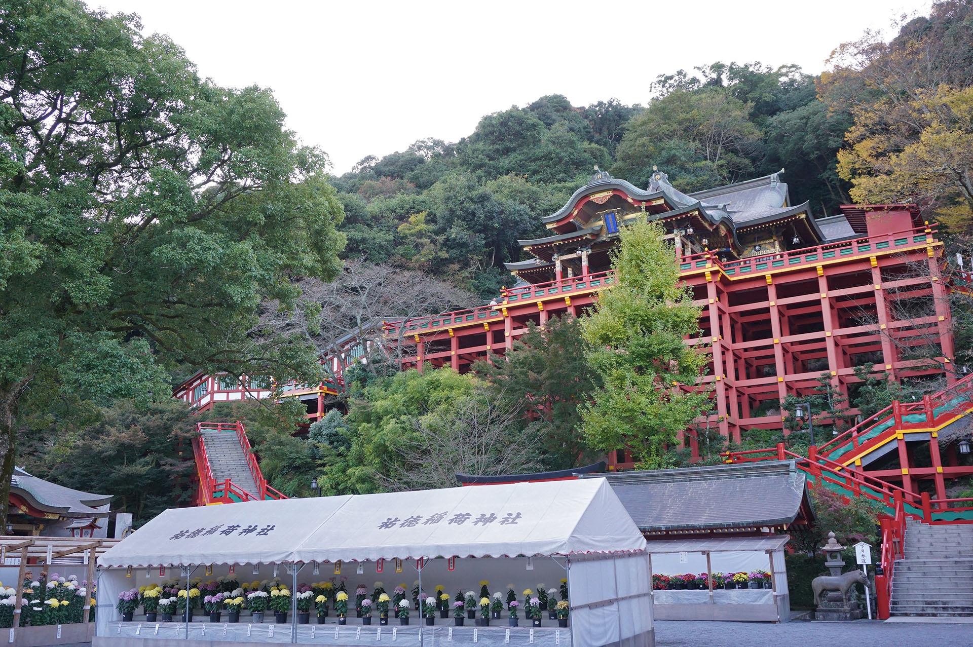 祐徳稲荷神社の本殿と菊の花