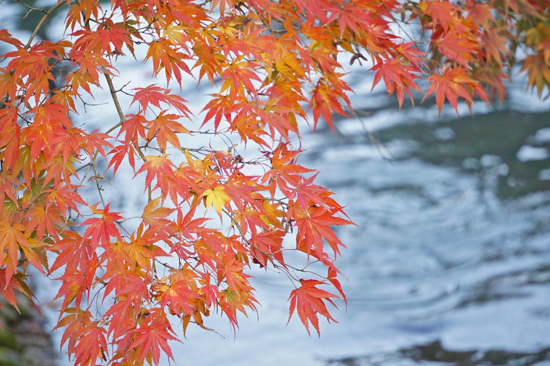 神池と紅葉