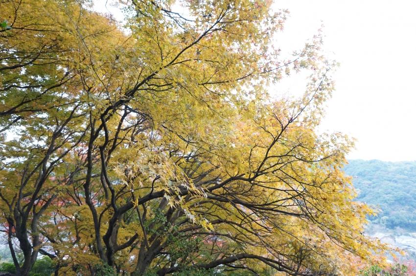 外苑の登山道にある紅葉