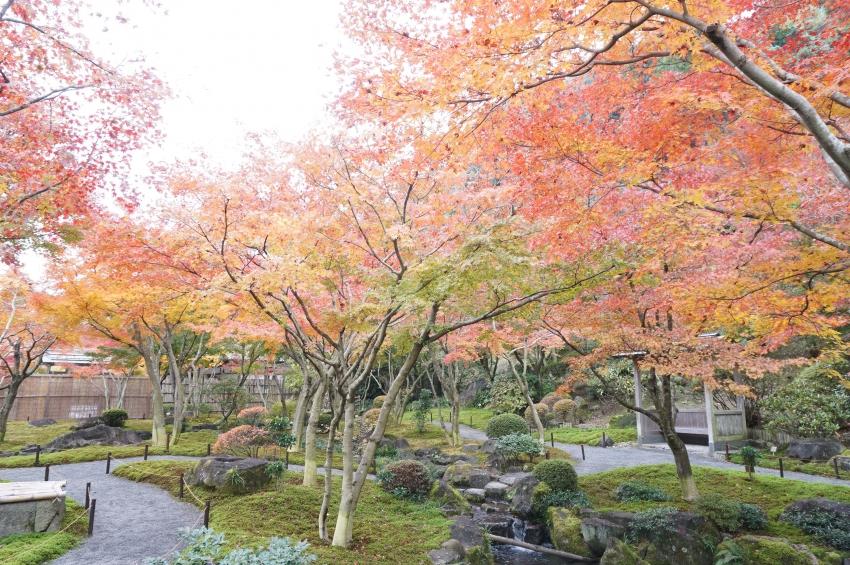 日本庭園の景色と紅葉