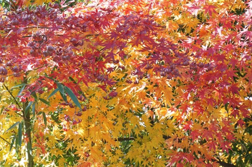 事比羅神社の紅葉