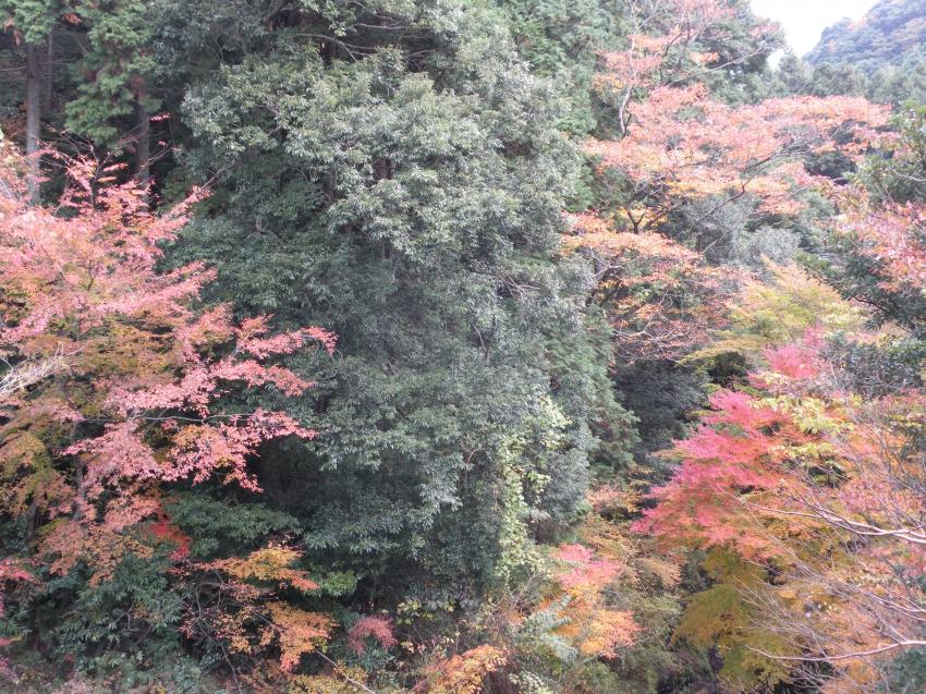 平谷渓谷の紅葉
