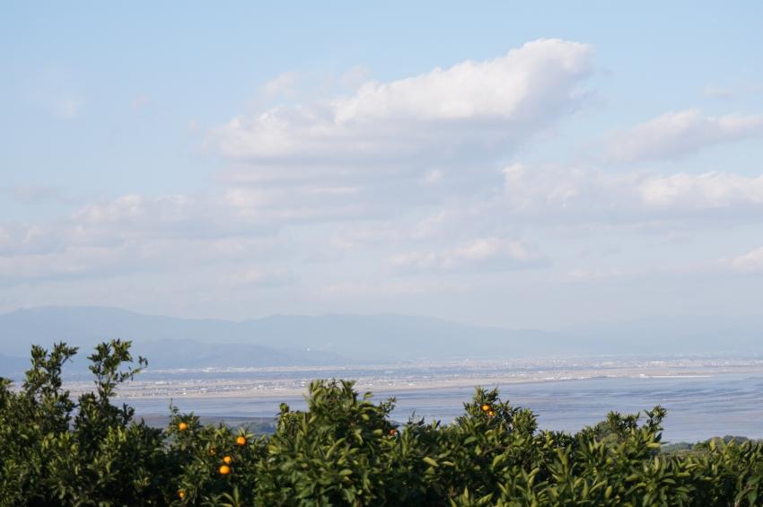 みかん畑から見える有明海の眺望