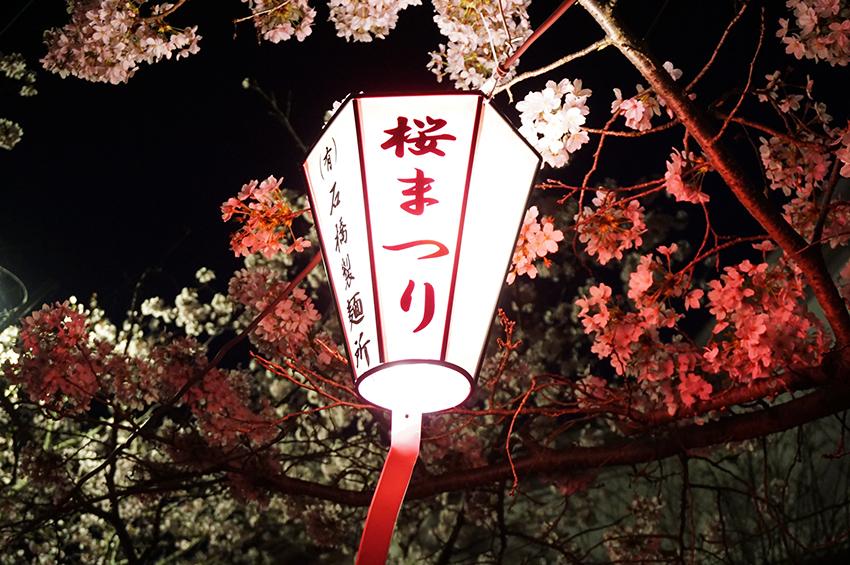 旭ヶ岡公園の夜桜のライトアップ