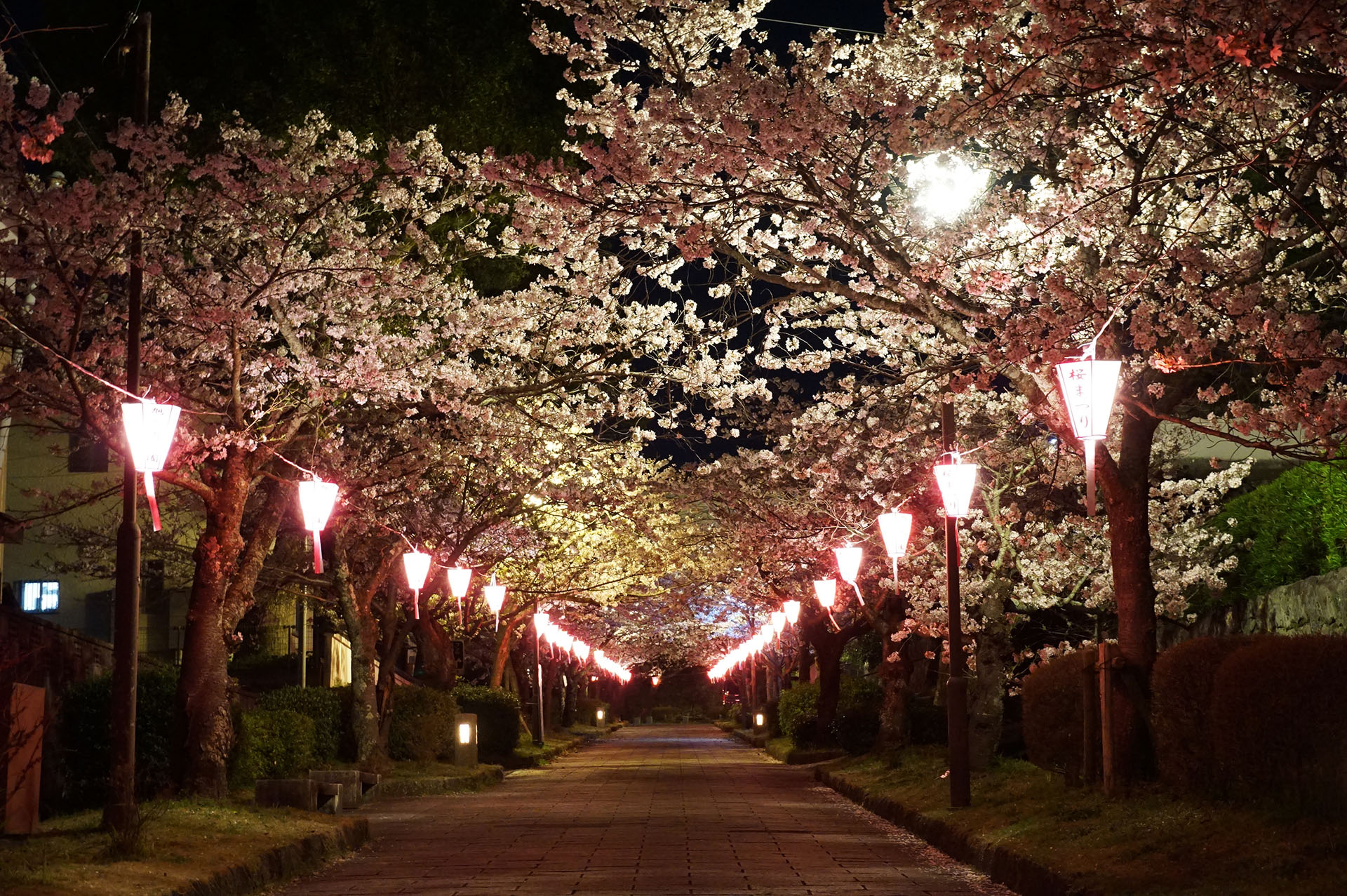 Flower Tunnel at night
