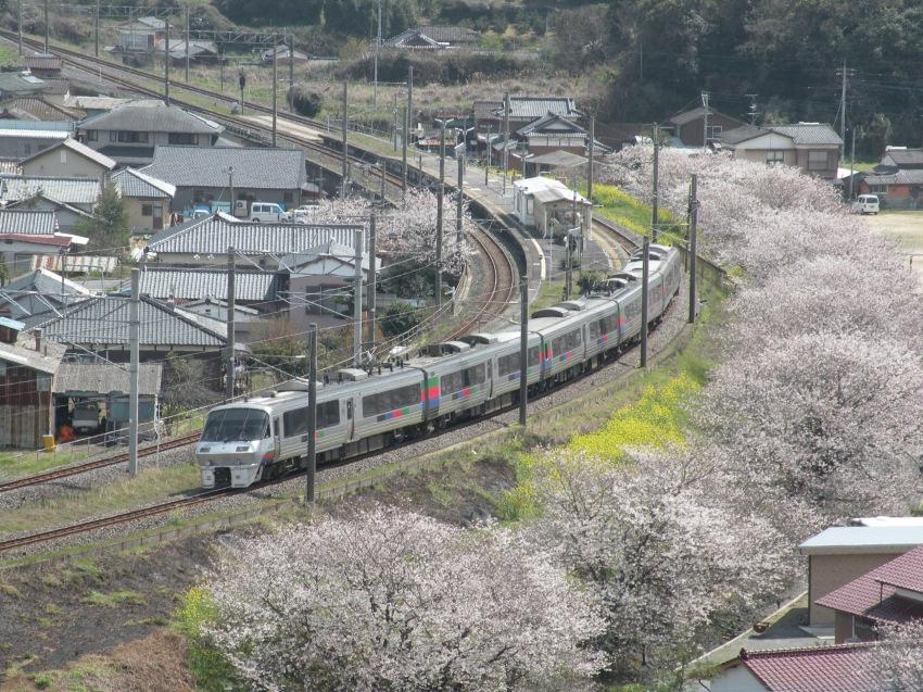 肥前飯田駅の桜と菜の花