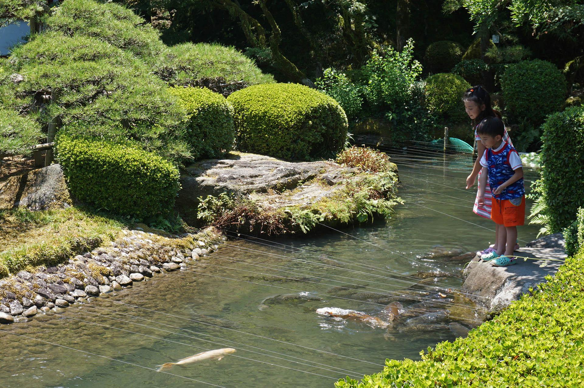 神池の鯉のえさやり