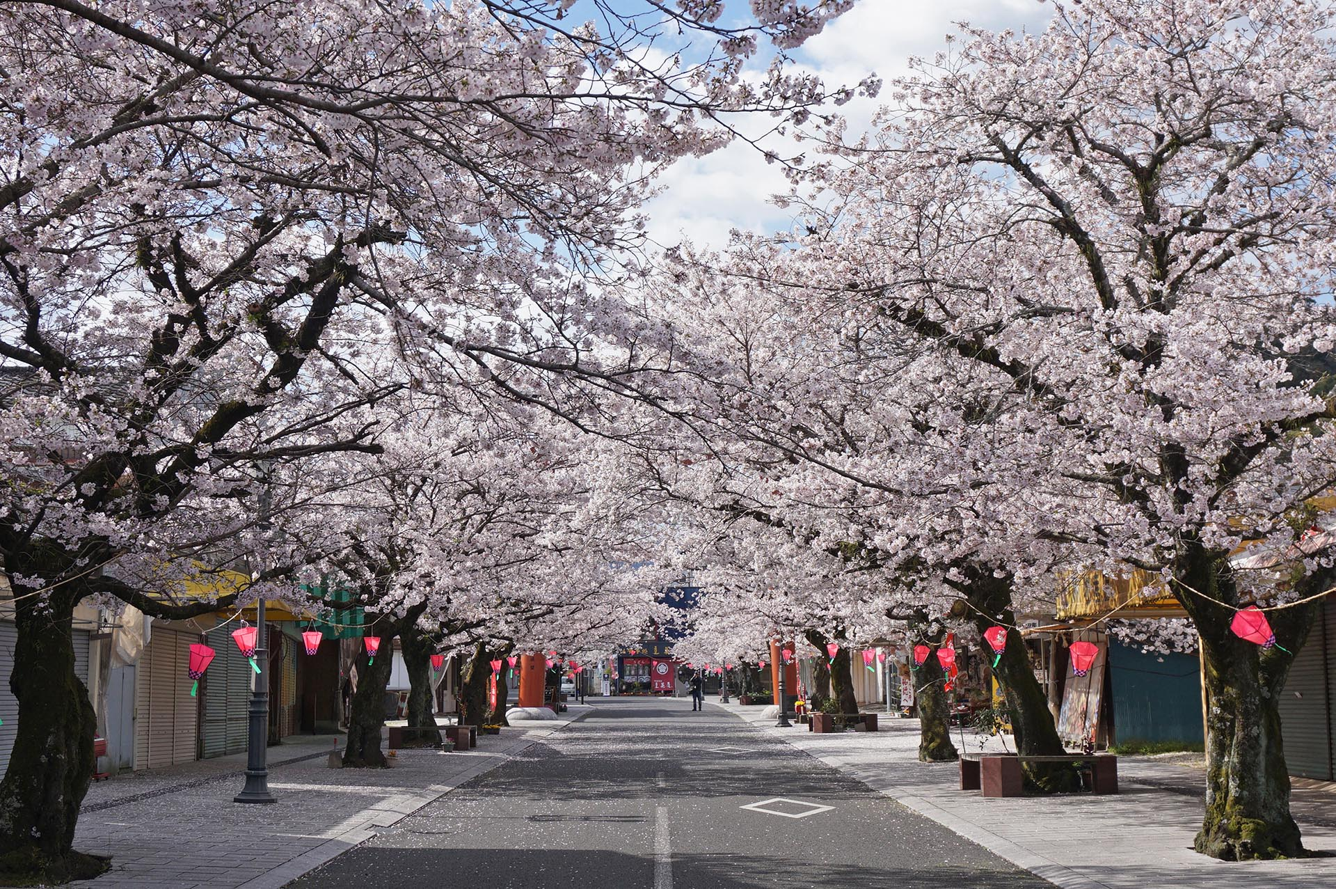 祐徳稲荷神社門前商店街の桜