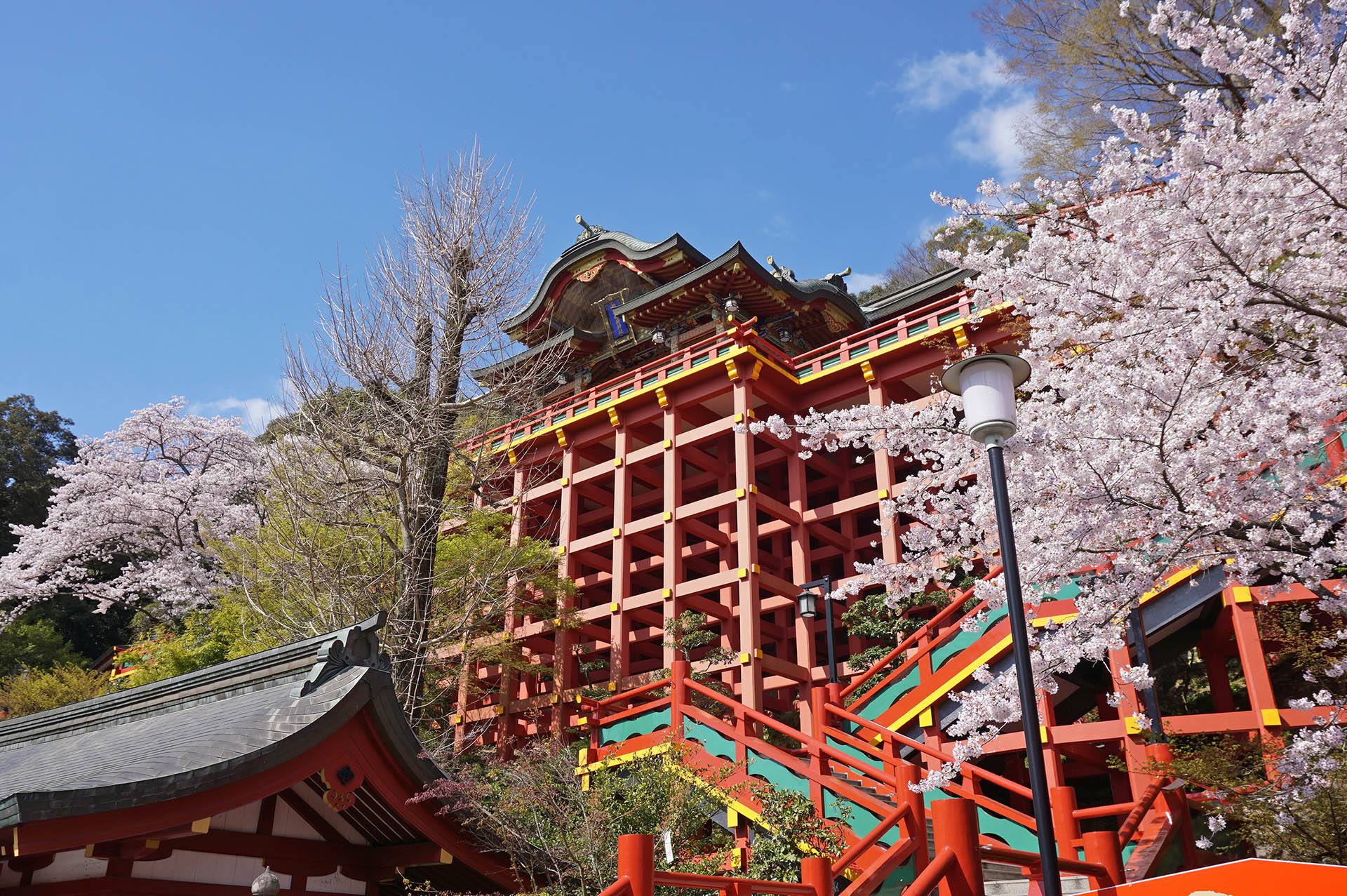 祐徳稲荷神社の桜