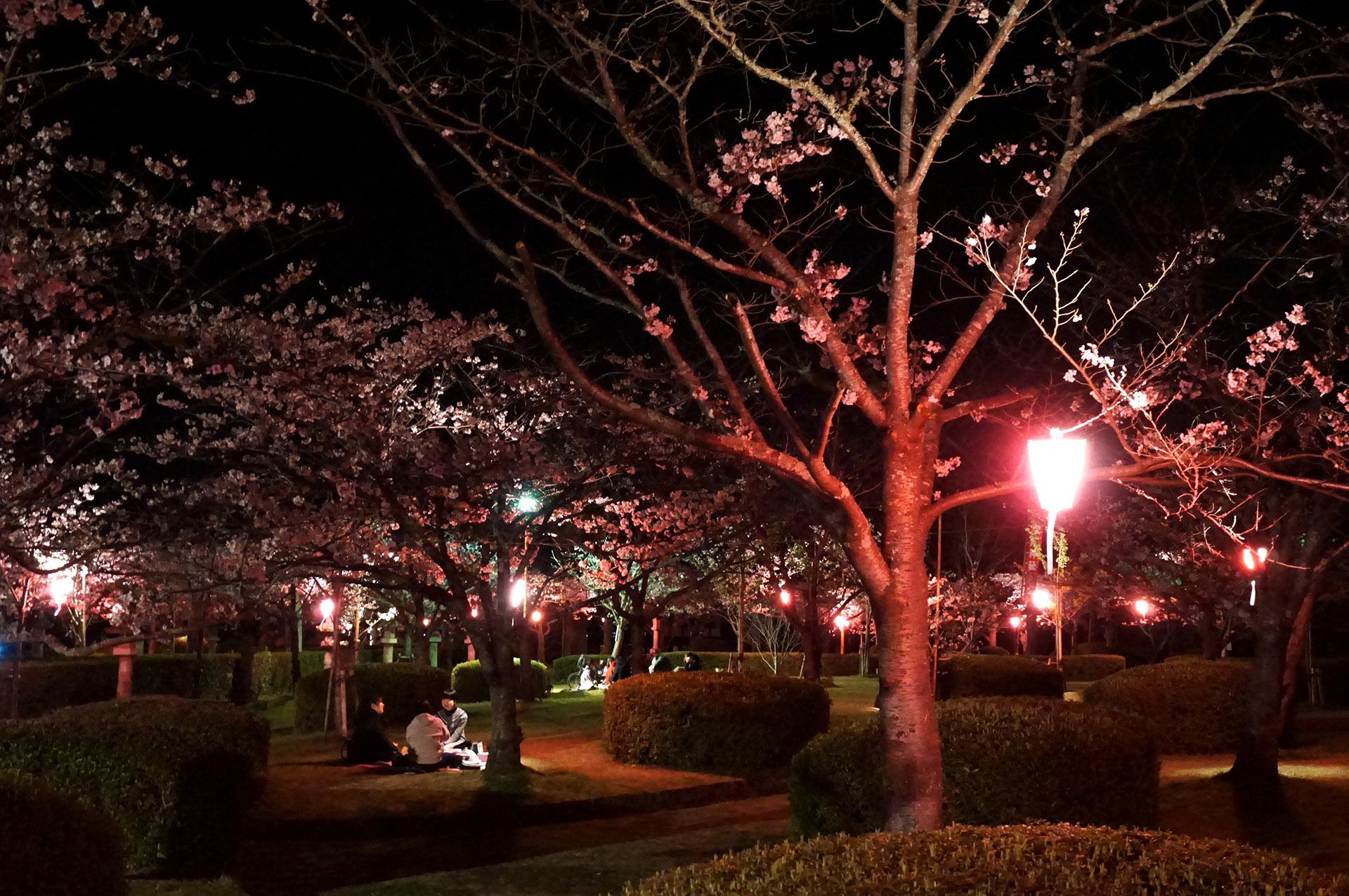 旭ヶ岡公園の花見