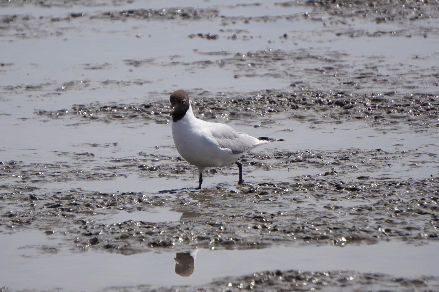 有明海の野鳥