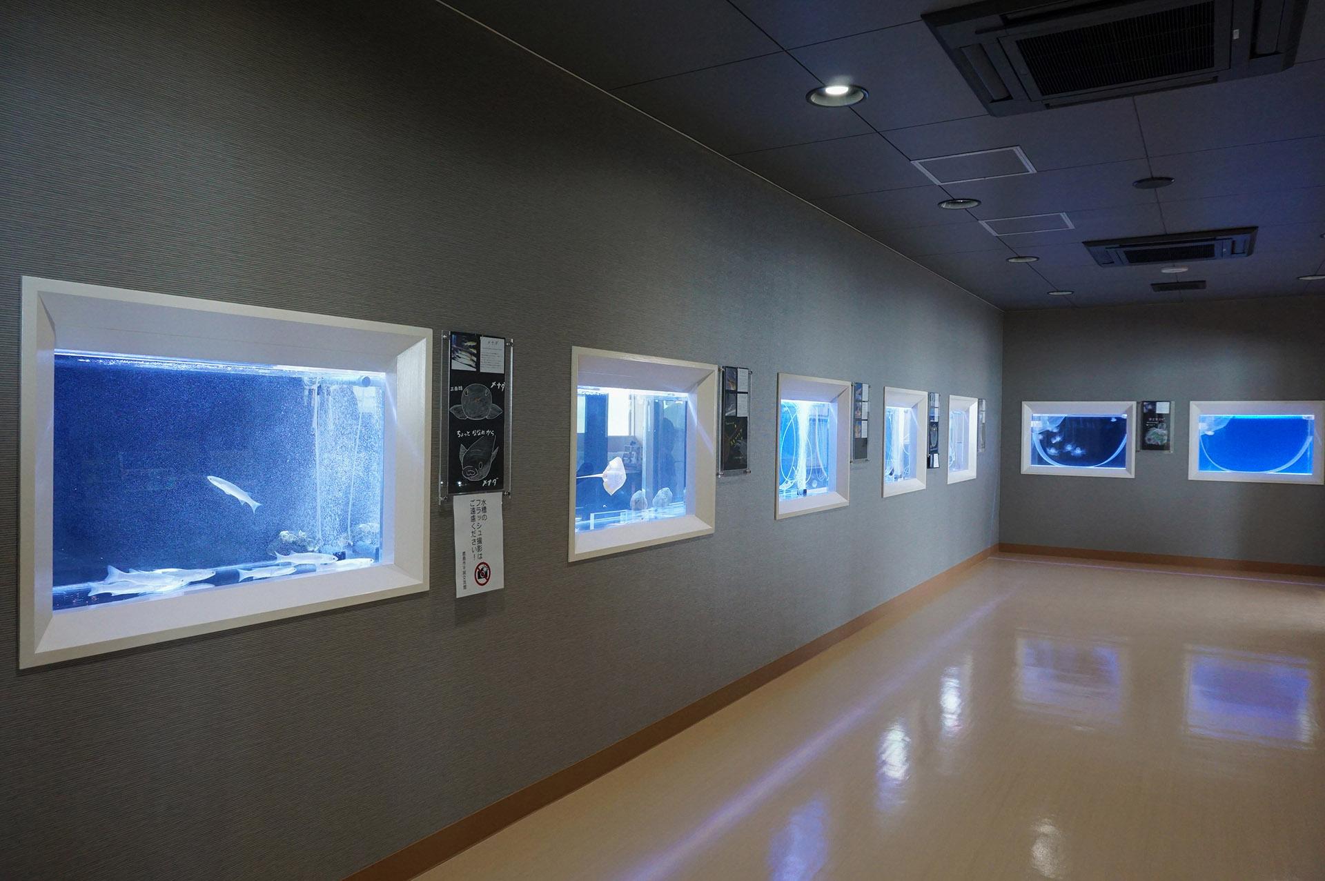 干潟交流館のミニ水族館